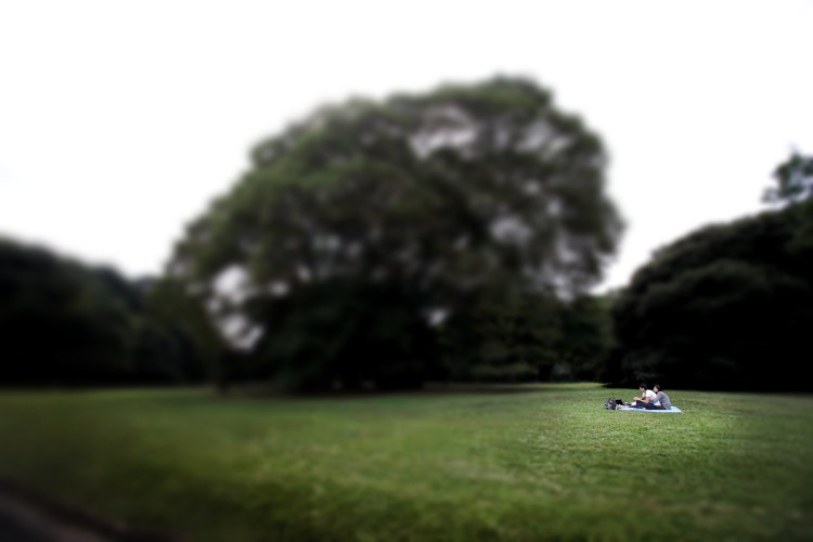 COUPLE AND THE BIG TREE - 3344